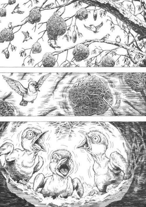 Gon T6, manga chez Pika de Tanaka